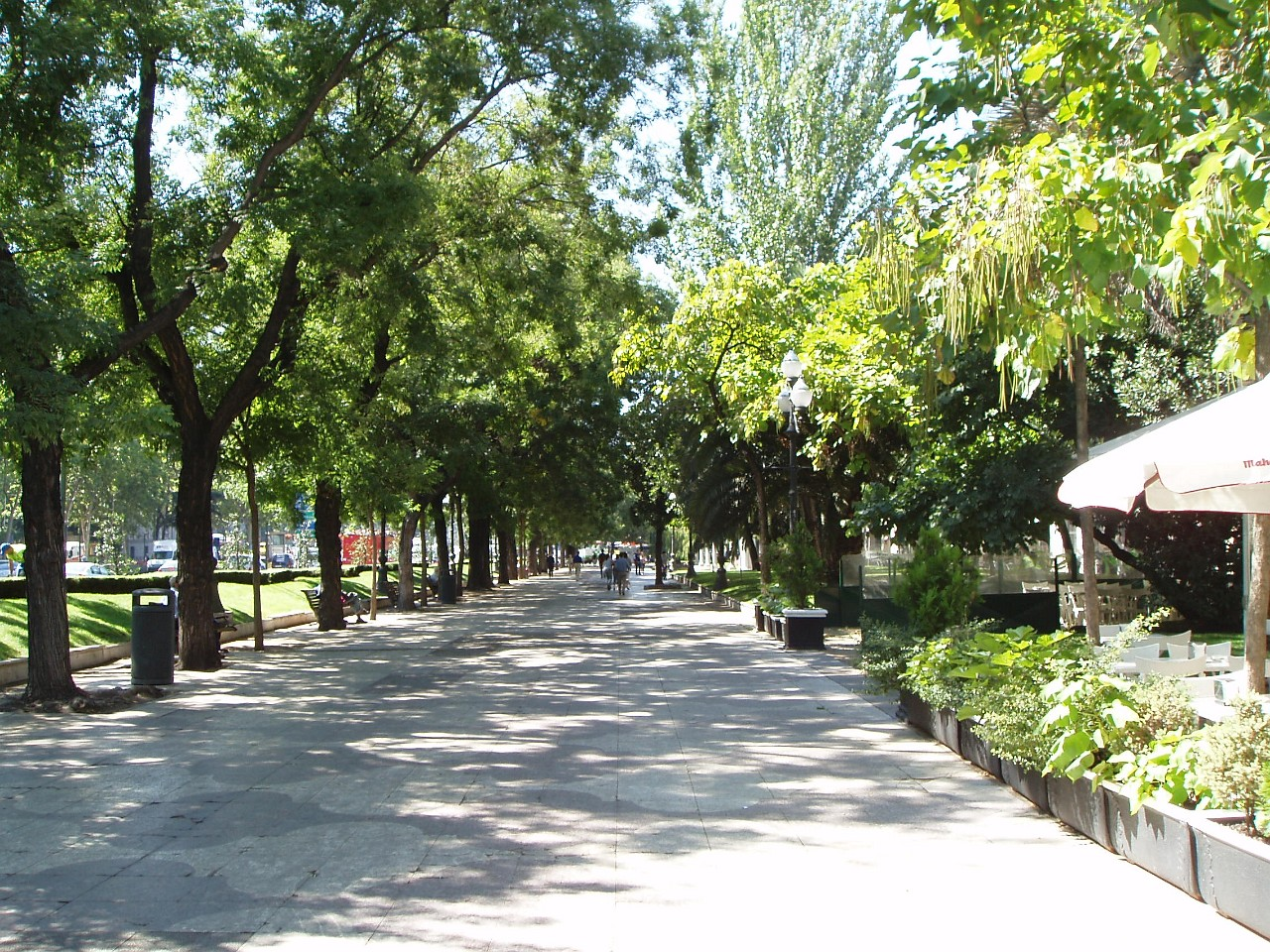 Beautiful tree-lined Paseo Recoletos