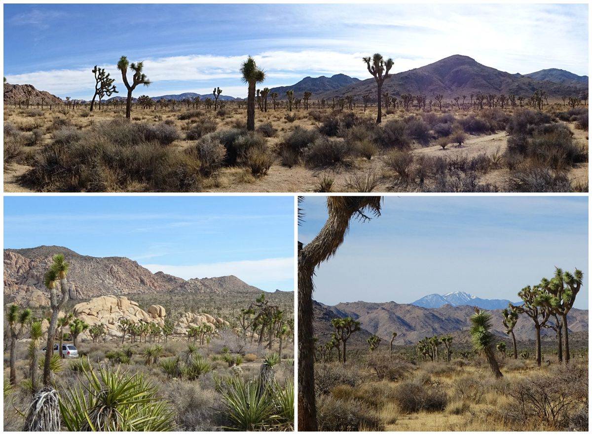 Joshua Tree National Park Lost Horse Valley
